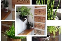 déco murale caisse de vin / plante sur pied